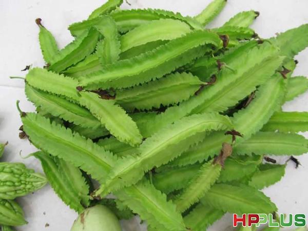 Cách trồng đậu rồng đơn giản trong thùng xốp cho quả sai trĩu
