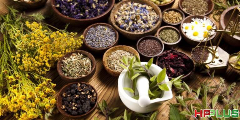 Cách chữa bệnh viêm loét dạ dày bằng thuốc Nam với cây thuốc dân gian