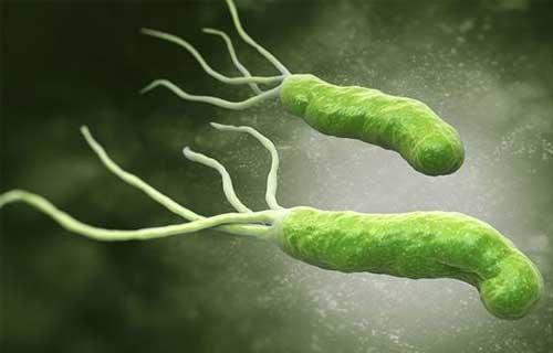 Vi khuẩn HP có nguy hiểm không? | Vinmec